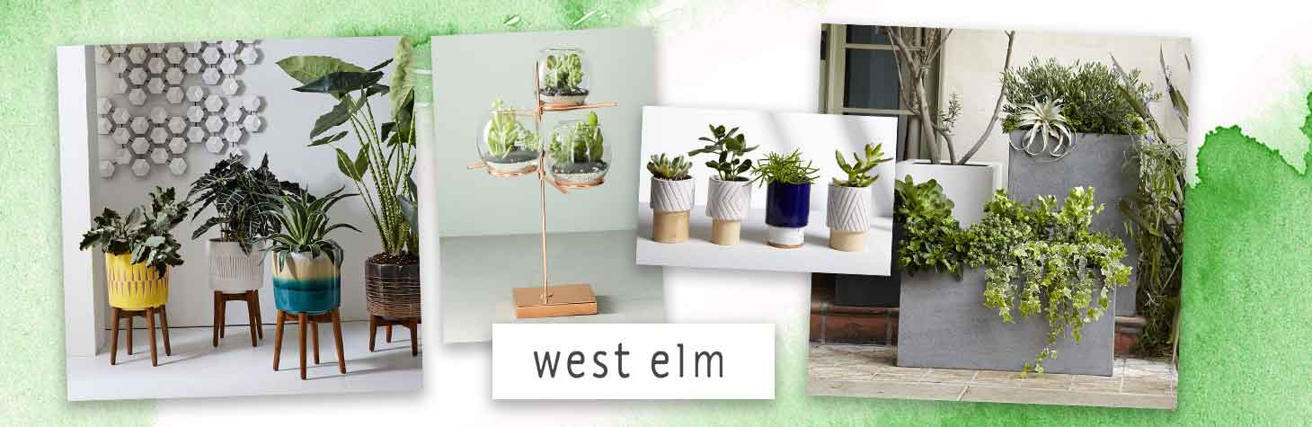 Sophisticated terrariums and planters by West Elm